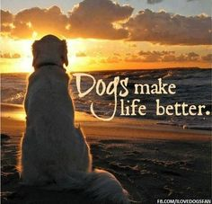 Dogs make life better