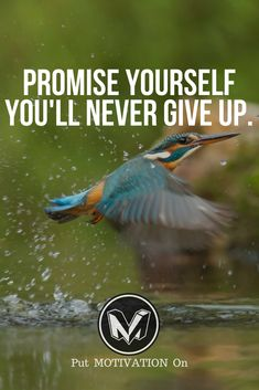 Never Give Up Follow all our motivational and inspirational quotes.Follow the link to Get our Motivational and Inspirational Apparel and Home Décor. #quote #quotes #qotd #quoteoftheday #motivation #inspiredaily #inspiration #entrepreneurship #goals #dreams #hustle #grind #successquotes #businessquotes #lifestyle #success #fitness #businessman #businessWoman #Inspirational