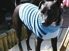 dog sweater w/ turtle neck (large sizing!)                                                                                                                                                                                 More