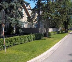Low hedges are a good way to prevent people from cutting across your lawn. Corner lot landscaping design is a little different than a normal street lot, as your property now includes an additional 90 degrees of vision. Corner