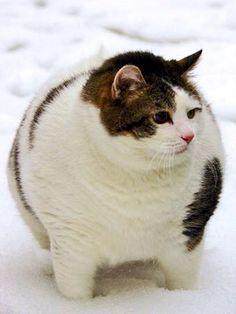 """In other Chuhito's """"fun cat"""" album   one Ippuru album"""