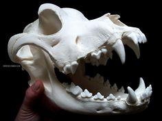 Rottweiler Skull by shadyufo Dog Skull, Lets Get Weird, Rottweiler, Thor, Skulls, Inspiration, Art, Biblical Inspiration, Art Background