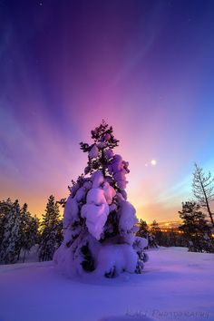 Snow tree...magical colors! <3