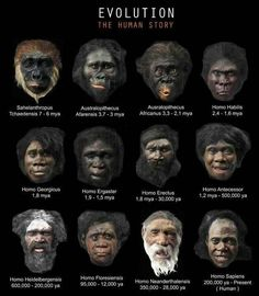 """Evolution is fact. Creationism is denial of the facts? So these paintings of fictions """"transitional' humans are proof of what exactly? DNA has determined ape bones are ape and human bones are human. Anthropologie, Homo Habilis, Human Evolution, Evolution Science, The Evolution, Early Humans, World History, Science And Nature, Natural History"""
