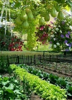 Glorious Enjoy Life With Your Own Flower Garden Beautiful Easy Ideas. Enjoy Life With Your Own Flower Garden Beautiful Easy Ideas. Vegetable Garden For Beginners, Starting A Vegetable Garden, Veg Garden, Vegetable Garden Design, Edible Garden, Gardening For Beginners, Flower Garden Design, Home Garden Design, Diy Garden Decor