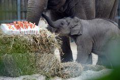 ERR - Chicago Tribune - Baby animal photos