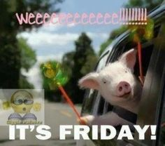 Love, love, love, Maxwell the pig! haha love this pig! Its Friday Quotes, Friday Humor, Funny Friday, Friday Gif, Friday Dance, Tgif Funny, What Day Is It, Thing 1, Happy Friday
