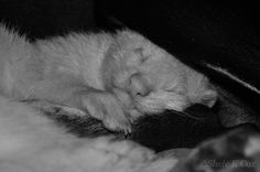 Ferret - Loki's brother Thor cuddling up to Jett, his brother from another mother ;)