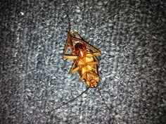 Roach found on 07/01/2012. Dead!