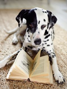 Is he reading 101 Dalmatians? I hope so.