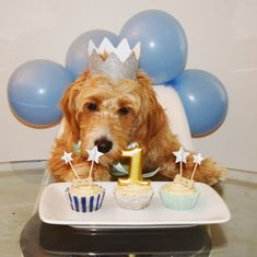 Dog First Birthday, Puppy Birthday Parties, Puppy Party, Animal Birthday, Cute Dog Photos, Dog Pictures, Diy Pour Chien, Tattoo L, Dog Cake Recipes