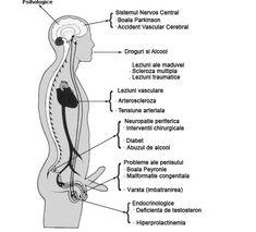 penisul mic al tipului anomalii ale penisului