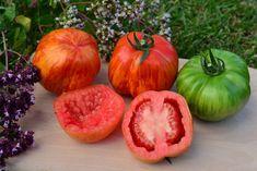 Rajčiaky: Návod na pestovanie od A po Z - Pluska.sk Vegetables, Food, Edible Garden, Gardens, Compost, Lawn And Garden, Essen, Vegetable Recipes, Meals