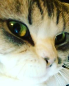 Pin for Later: 26 Times You Wished You Were Taylor Swift's Cats How Meredith gets to keep Taylor company now that tour is over.
