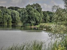 Parc Urbain à Savigny-le-Temple - Cygnes sur le lac