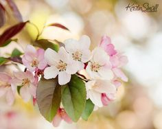 Spring in NH | Flickr - Photo Sharing!