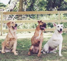 """This Couple Can't Stop Adopting 3-Legged Dogs - They call them the """"tripawd squad."""" - The dodo"""