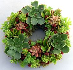Live wreaths - Seriously, you can do this?  I love it.