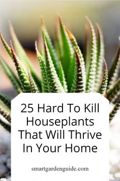 These 25 hard to kill houseplants are so easy to look after. Whether you sometimes neglect your houseplants or kill them with kindness, these houseplants will continue to thrive year after year. Easy Care Indoor Plants, Indoor Flowering Plants, Blooming Plants, Madagascar Dragon Tree, Purple Shamrock, Snake Plant Care, Cast Iron Plant, Umbrella Tree, Kitchen Plants