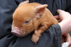 And this little piggy got a ride home.