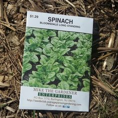 How to Plant Spinach at Home