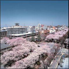 Sagamihara, Japan