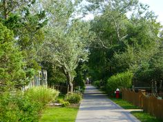 A quaint town, with walking trails and bike paths (no cars!), Fire Island, NY