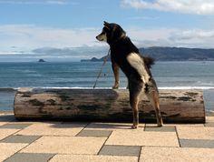 くるみちゃん/宇佐美海岸にて/潮風を浴びながら、サーファーを眺めています。