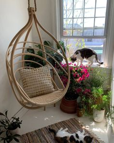 Having a great hammock or a swing in your backyard is cool, but putting one up inside your home? Now that's a refreshing way to give a new meaning to hanging out. There's something extra cozy (not to mention totally chic) about indoor hammocks and hanging chairs—it's like you can just curl up and float on cloud nine right there in your living room. No matter what your style is, from rainbows to macramé, there's a hanging retreat for everyone on this list. Indoor Swing, Indoor Hammock, Hammock Swing, Hammock Chair, Hammocks, Hanging Chairs, Hanging Out, Cozy Family Rooms, What's Your Style