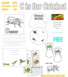 Although This Lapbook Is Meant For Young Students Learning The Alphabet Cricket Life Cycle