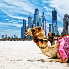 This Festive shopping season explore with the lively streets, bright lights and much more with great travel deal at Hurry and Book Now! For more customization on the deals! Call us at 18008436411 Dubai Holidays, Bus Tickets, Dubai City, Travel Dating, Sharjah, The Dunes, Nairobi, Travel News, Kenya
