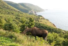 Discover Cape Breton Island, Nova Scotia on a Self-Guided Walking tour with award-winning Country Walkers. Cabot Trail, British Columbia, Country Walkers, Cap Breton, Nova Scotia Travel, Canadian Travel, Travel Tours, Walking Tour, Beautiful Landscapes