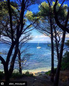#Repost @alex_mouquet #Belambrawards  Inside the forest...  #SouthOfFrance #cotedazur #Giens #Hyeres #landscape #sea #France #igersFrance #beach #blue #Var #vacances #holidays #boat #summer Hotels-live.com via https://www.instagram.com/