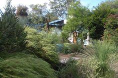 Grass Trees add interest to a garden.