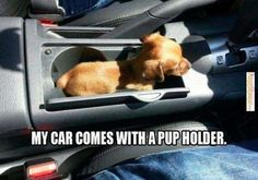 A social media platform for cars lovers and buyers is here.Set up your profile at CarLister.co. Car, funny, humor, puppy