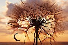 Dandelion or Tree. Make a wish!
