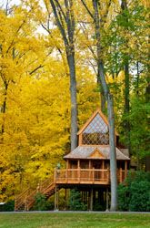 Tree house at Longwood Gardens Woodland House, Forest House, Robinson Crusoe, Beautiful World, Beautiful Places, Cool Tree Houses, Small Houses, House In Nature, Longwood Gardens