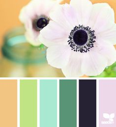Design Seeds...I'm obsessed with these pre-made color palettes. You can never get enough ideas!