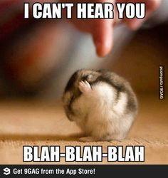 Funny Quotes: Top 30 Funny Animal Pictures and Jokes images . - BildersPin : Funny Quotes: Top 30 Funny Animal Pictures and Jokes images . Animal Captions, Cute Animal Memes, Funny Animal Quotes, Animal Jokes, Cute Memes, Cute Animal Pictures, Really Funny Memes, Cute Funny Animals, Funny Pictures
