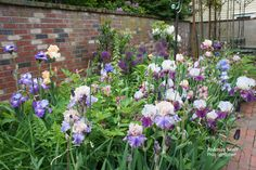 A broad view of our Iris Bed.