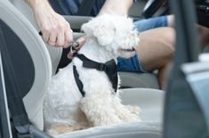 Today Is National Pet Travel Safety Day - Keep Your Furry Friends Safe On The Road With These Tips Puppies Tips, Dogs And Puppies, Cute Dogs Breeds, Dog Breeds, Flying With Pets, Dog Travel, Travel Tips, Today Is National, Puppy Care