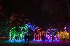 53 Best Zoo Lights Images In 2019 Light Painting Lights Zoo Lights