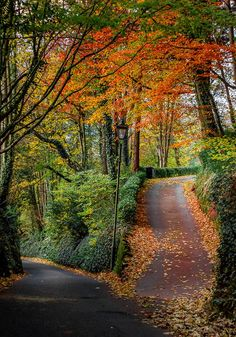 autumn landscape A fork in the road (Devon, England) by Karl Hutchinson / Fall Pictures, Nature Pictures, Beautiful World, Beautiful Places, Landscape Photography, Nature Photography, Fork In The Road, Autumn Scenes, Autumn Aesthetic