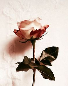 """A rose by any other name would smell as sweet"" ~ Shakespeare"