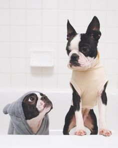 Like this? Find more on Instagram: http://ift.tt/2lQo7EB We mean this is fine just pls don't turn the water on. #kthanks #nobaths #rathernot #weeklyfluff .