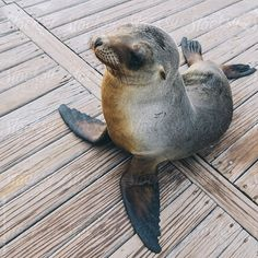 Galapagos Sea Lion Pup by Shelly Perry - Stocksy United Pet Birds, Pup, Sea Lions, Animals, Bing Images, Swimming, Baby, Beautiful, Swim