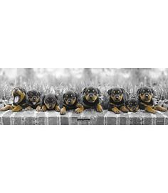 Poster Puppies (Keith Kimberlin) Stud Earrings, Puppies, Poster, Stud Earring, Puppys, Posters, Newborn Puppies, Pup, Cubs