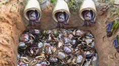 Top 5 video 2017 Amazing Man Make 5 Fish Trap Crab Trap & Eel Trap in Cambodia Crab Trap, How To Make Fish, Smart Boy, Survival Food, Survival Stuff, Bushcraft Camping, Fish Ponds, A Good Man, Videos