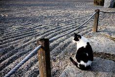 A zen cat in a zen garden