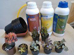 cultivando Orquídeas e idéias: SOBRE AS RAIZES DAS ORQUIDEAS- O SEGREDO DA SAUDE DAS PLANTAS! Indoor Plants, Floral, Mineral, Gardening, Garden Pallet, How To Replant Orchids, Organic Fertilizer, Orchids Garden, Gardens
